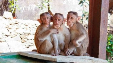 No monkeying around: liquidator summons administrators.