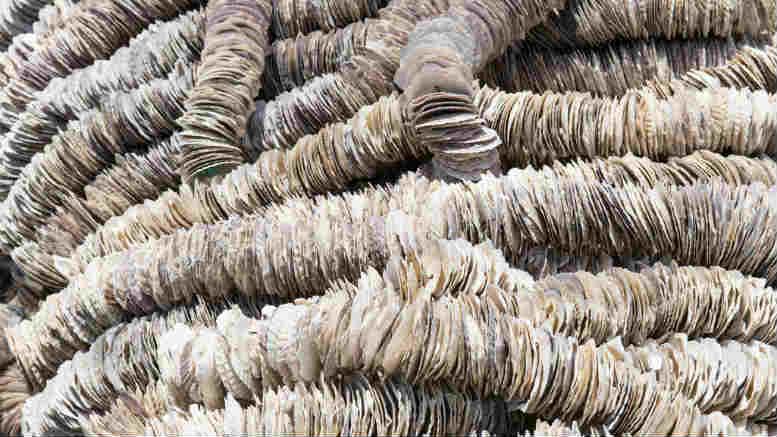 Scallop farmer takes on PPB Advisory pair over failed aquaculture